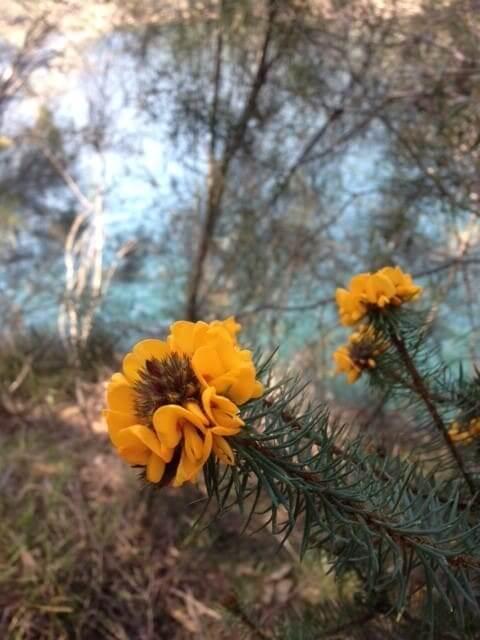Australian Wildflowers alive in Spring